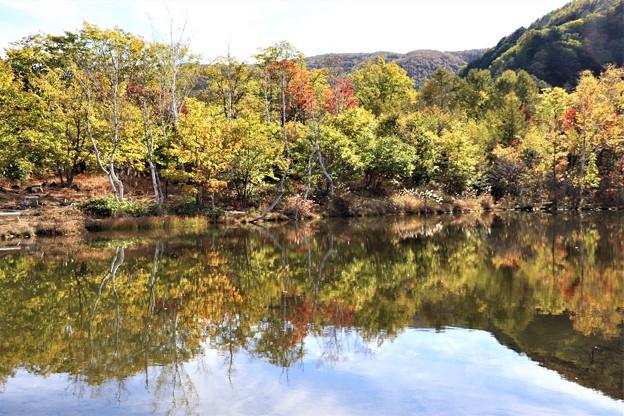 まいめの池の水鏡