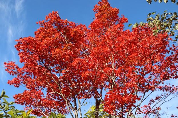 紅葉真っ盛りの見頃