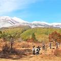 一本楓と雪の乗鞍岳の見物客
