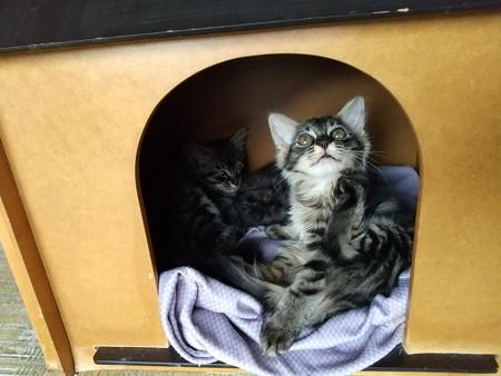 犬小屋でくつろぐ子猫