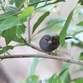 緑の枝の黒い鳥