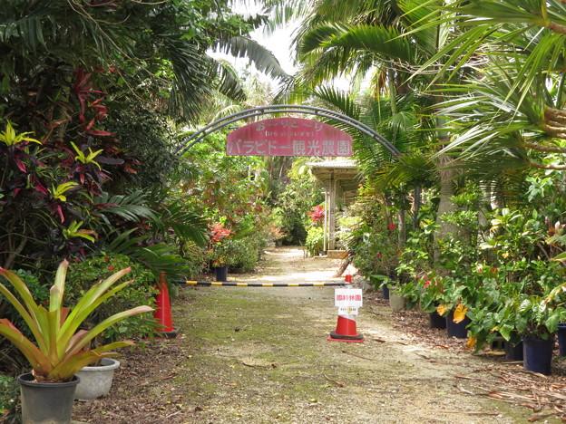 バラビド-植物園