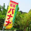 ばニャニャ農園