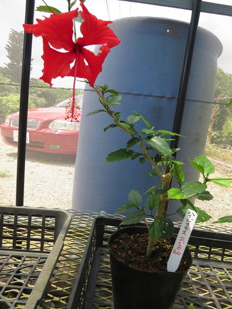 花の無人販売