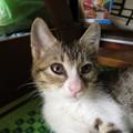 Photos: カイネコの飼い猫