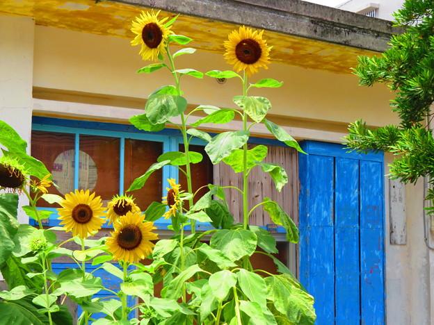 Photos: 青と黄色