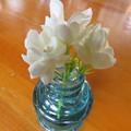 さんぴん茶の花