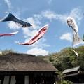 Photos: 青空に泳ぐ