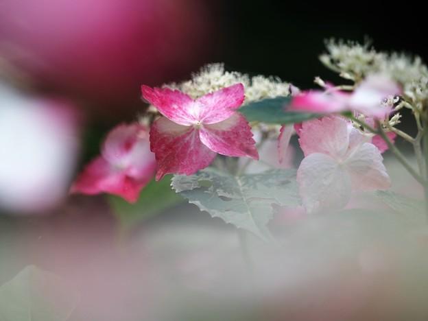 Photos: 夏至の彩り