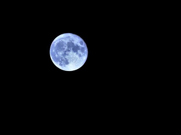 月がとっても青いから~
