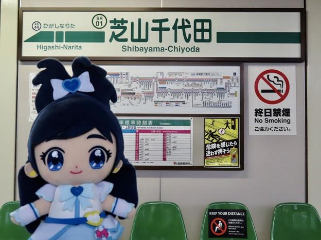 キュアホワイト×芝山千代田駅