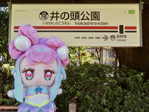 キュアラメール×井の頭公園駅