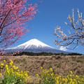 Photos: 春の三色そして青空。