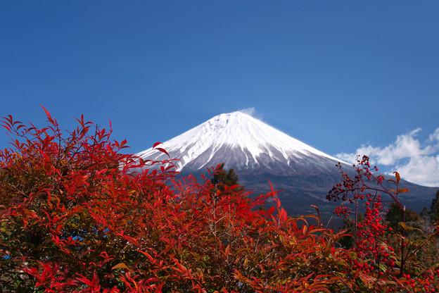 紅色濃く南天の葉。