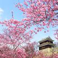 櫓と桜日和。