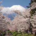 忍野にも早い春。