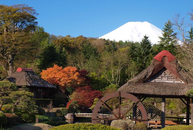 春も秋色、古民家の庭。