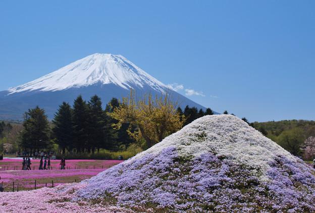 芝桜冨士山と。