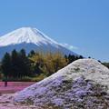 Photos: 芝桜冨士山と。
