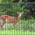 Photos: シカトしないよ鹿。