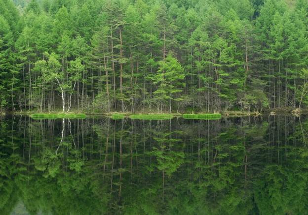 緑なる御射鹿池。
