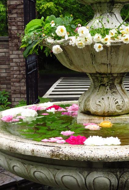 噴水のバラのエントランス。