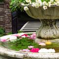 Photos: 噴水のバラのエントランス。