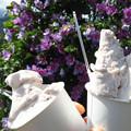 花豆シングルとあずきミルク&花豆ジェラート。