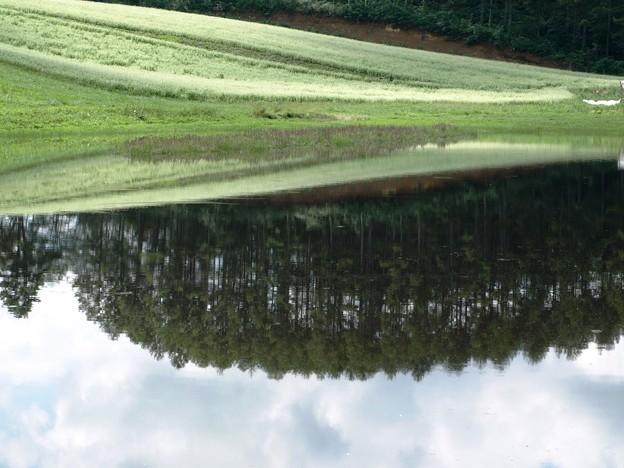逆さ森とそば畑。