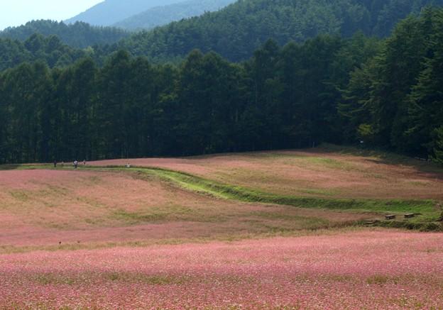 赤そば畑の道を歩く。