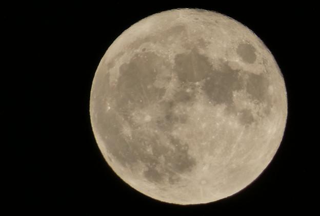 名月を撮ってあげましょ、ドアップで。