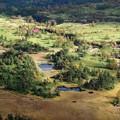 メルヘンの森か、芳ヶ平湿原。