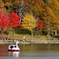 対岸の紅葉とスワンボート。