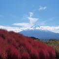 コキア山と富士山と。