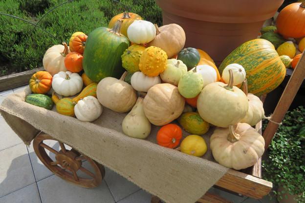 かぼちゃ、カボチャ、南瓜。