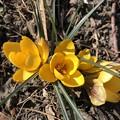 小さい春みっけ~♪