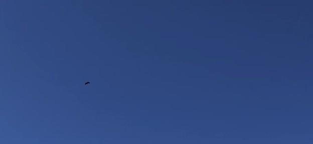鳥... 一昨日のお散歩