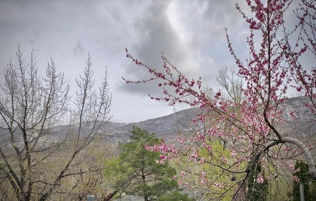 裏山とピーチの木♪