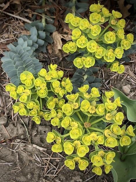 緑の花…が黄色に変身!