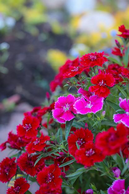 ファームの花