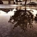 June 5, 2021   8:42pm   雨上がりのお楽しみ。。