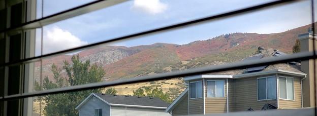 窓から見える裏山の秋♪
