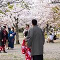 Photos: 京都の春