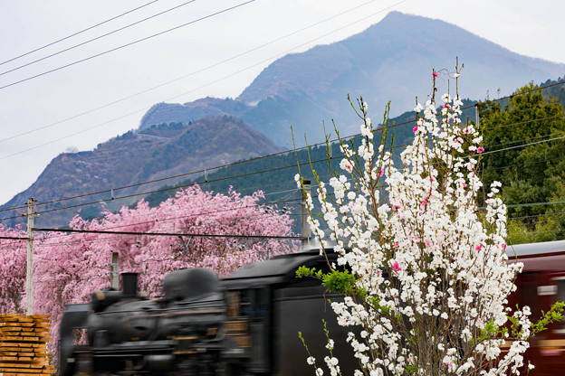 秩父鉄道 武州中川~浦山口