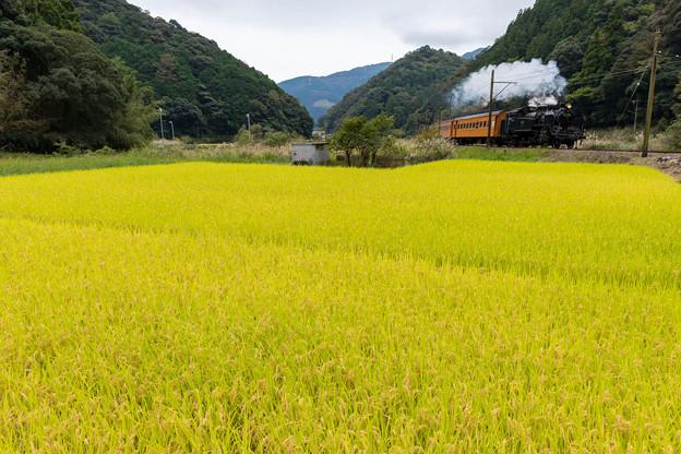 大井川鐵道 福用~大和田