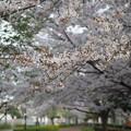 Photos: 春小道