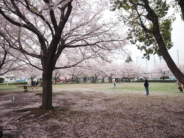 Photos: 咲いた証