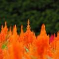 にじむ橙色