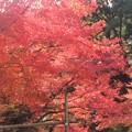 Photos: 櫻井家庭園の紅葉 美しい日本庭園が見れます