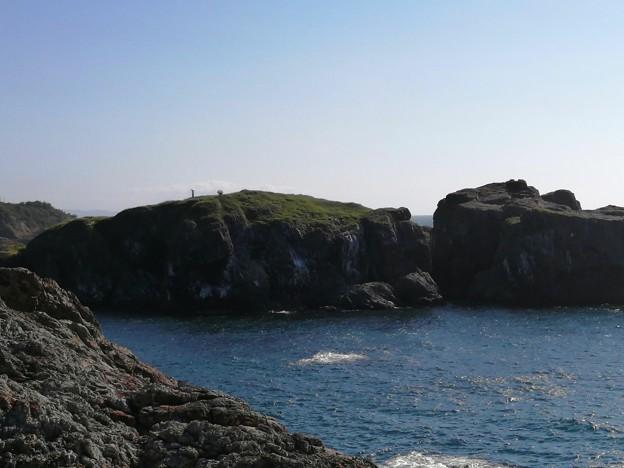国の天然記念物 経島ウミネコ繁殖地